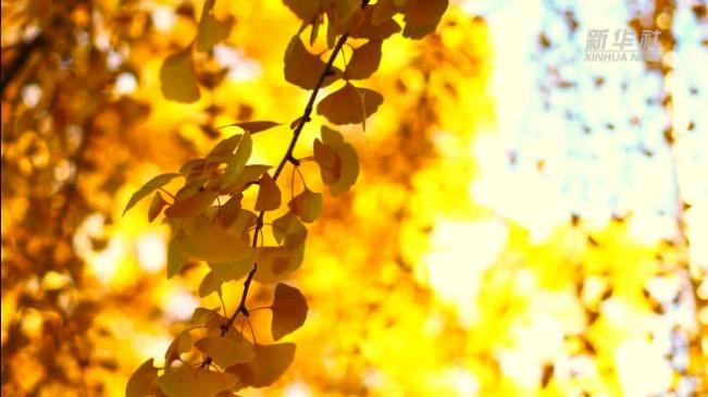 這就是秋天的符號