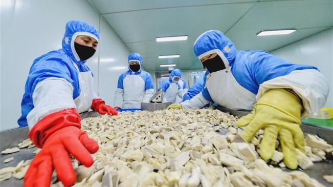河北肥鄉:扶貧産業復工復産促增收