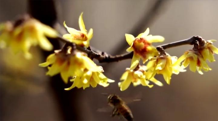 暖心聞丨春天的腳步
