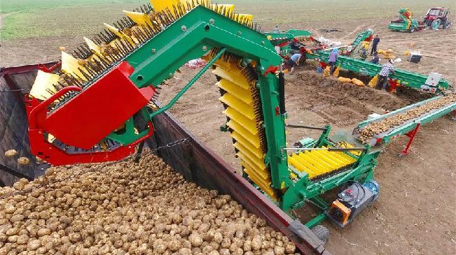 河北灤南:壯大蔬菜産業 助力鄉村振興