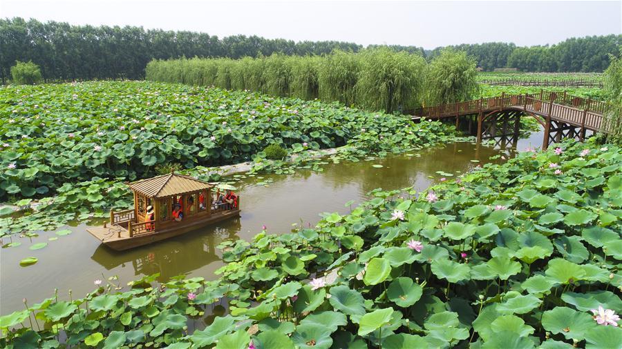 河北香河:荷花盛開樂遊人