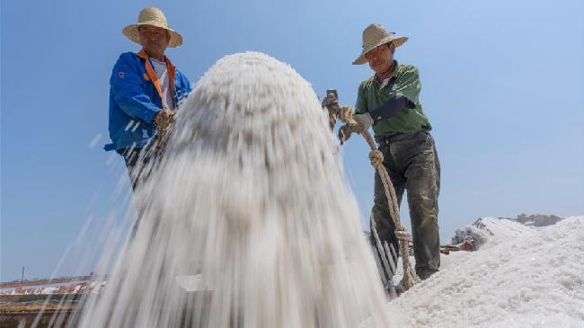 河北唐山:南堡鹽場收獲春鹽