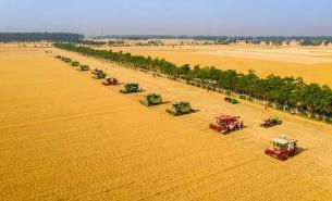 河北小麥收獲超六成